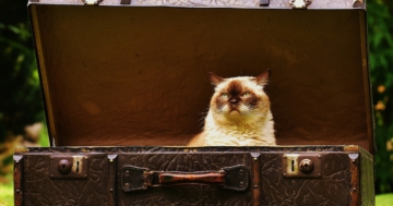 mit Katze umziehen
